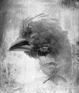 BirdHeadEins copy