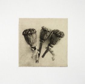 "Jeanne Wells, Poppies, Photopolymer gravure with chine- colle, 17""x 17"" http://jeannewells.com"