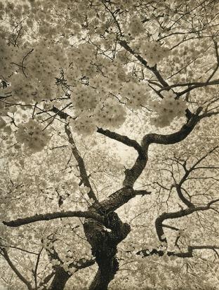 Yvette Lucas, Lace, Photo intaglio. http://www.yvettelucas.com/Artist.asp?ArtistID=15501&Akey=M6EGNR2E